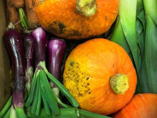 legumes-bio-restaurant